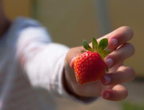 dziecko, truskawka, poziomka, zbieranie truskawek